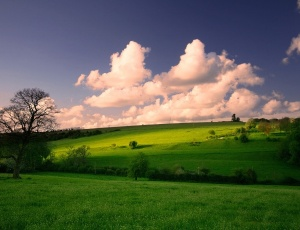 600_Meadow-Tree-Sky